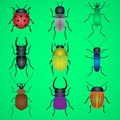 Color bugs and beetles icons set eps10 — Stock Vector