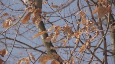 Foglie di autunno su un albero — Video Stock