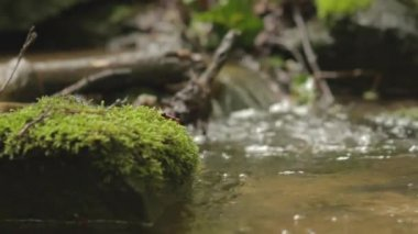 Small stream in a forest — Stockvideo