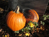 Two pumpkins dressed for the Halloween season — Stock Photo