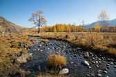 Autumn, creek, a lonely tree — Stockfoto