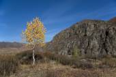 Autumn, lonely birch on the background cliffs and blue sky — Stock Photo