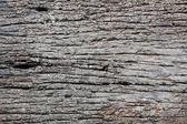 Decay wood — Stock Photo