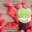 Green leaf and red heart shape in flower pot — Stock Photo #56208093