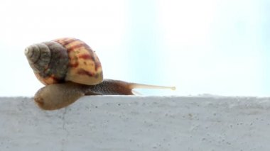 Macro close up snail slips on wall — Wideo stockowe