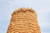 Dried corn — Stock Photo