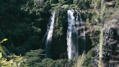 1080p, Waterfall On Hawaii — Stock Video