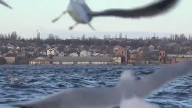 Seagulls flying over the waves of the river, many flock — Stock Video