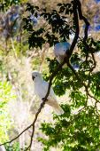Two Cockatoos On A Branch — Stock Photo
