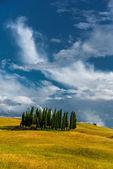 Toscany's cypress trees — Fotografia Stock