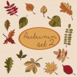 Set of autumn leaves — Stock Vector #52776677