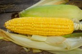 玉米芯木背景,静物. — 图库照片