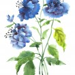 Summer blue flowers — Stock Photo #62202251