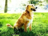 Dog in the nature — Stock Photo