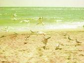 Tropical beach vintage background — Stock Photo