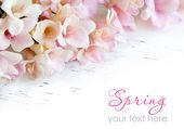 Pink freesia flowers  — Stock Photo