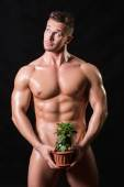 Bodybuilder holding a flower in a pot — Stock Photo