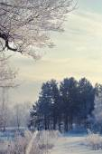 Winter landscape of snow-covered fields, trees — Stock Photo