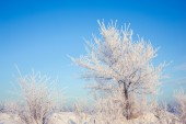 Winter tree in a field with blue sky — Stock Photo