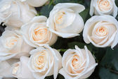 White roses. Soft focus and blurred background — Stock Photo