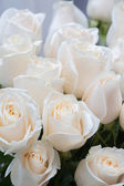 White roses as a floral background — Stock Photo