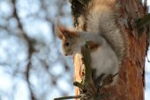 Funny squirrel looks down — Стоковое фото