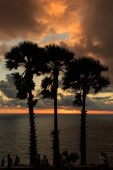 Silhouette of palm tree at sunset time — Foto de Stock