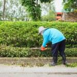 Woman cut bush clippers — Stock Photo #57673789