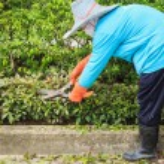 Woman cut bush clippers — Stock Photo #57674343