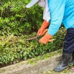 Woman cut bush clippers — Stock Photo #57674349