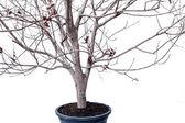 Sušené rostliny izolovaných na bílém pozadí — Stock fotografie