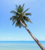 Coconut tree at tropical beach — 图库照片