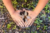 Hand of children holding plant and soil — Stock Photo