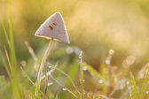 Setas en la hierba — Foto de Stock