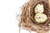 Quail eggs in the nest — Stock Photo