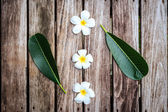 Plumeria flower or Frangipani on old wood plank — Stock Photo