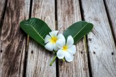 Plumeria blomma eller Frangipani på gamla trä planka — Stockfoto