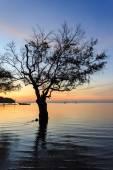 Silhouette of tree at sunrise beach — Photo