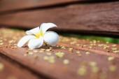 White Flower, Plumeria flower or Frangipani on old wood plank — Stock Photo