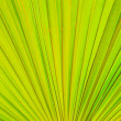 Texture of green palm leaf background — Stock Photo #59933619