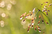 Grass flower in the morning — Foto Stock