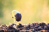 Young plant growing on soil  — Stock Photo