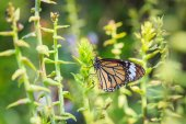 Butterfly on plant — Stock Photo