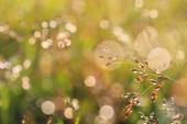 Grass flower in the morning — Stock Photo