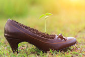 Young plant growth in lady shoe — Stock Photo