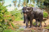 Elephant make shower — Stock Photo