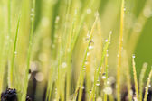 Close up Dew drops on green grass — Stock Photo