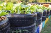 有機野菜の農場で使用されるタイヤのリサイクル — ストック写真