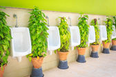 Men toilet with green plant — Stock Photo