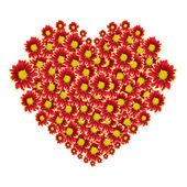 Beautiful heart of red flower isolated on white background — Stock Photo